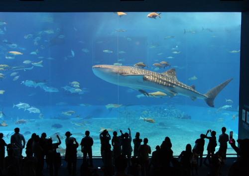 沖縄美ら海水族館02
