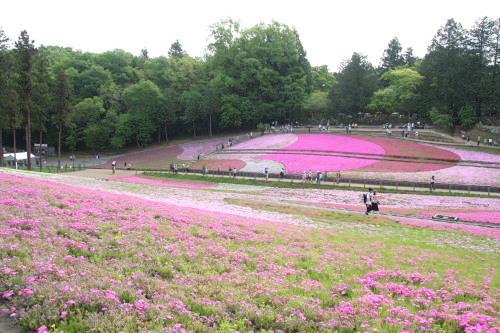 20150504_07芝桜の丘