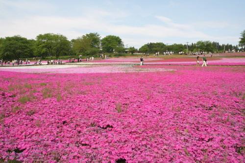 20150504_08芝桜の丘