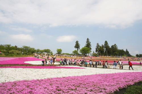 20150504_11芝桜の丘