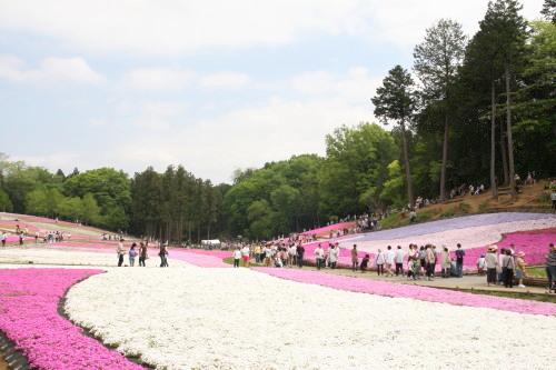 20150504_12芝桜の丘