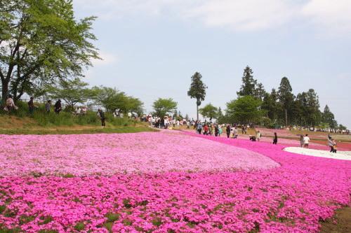 20150504_13芝桜の丘