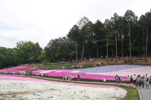 20150504_14芝桜の丘